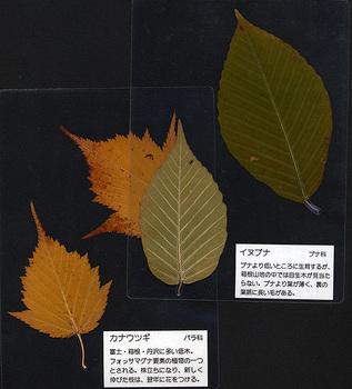 葉っぱパウチ.jpg