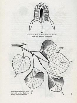 img334-88.jpg
